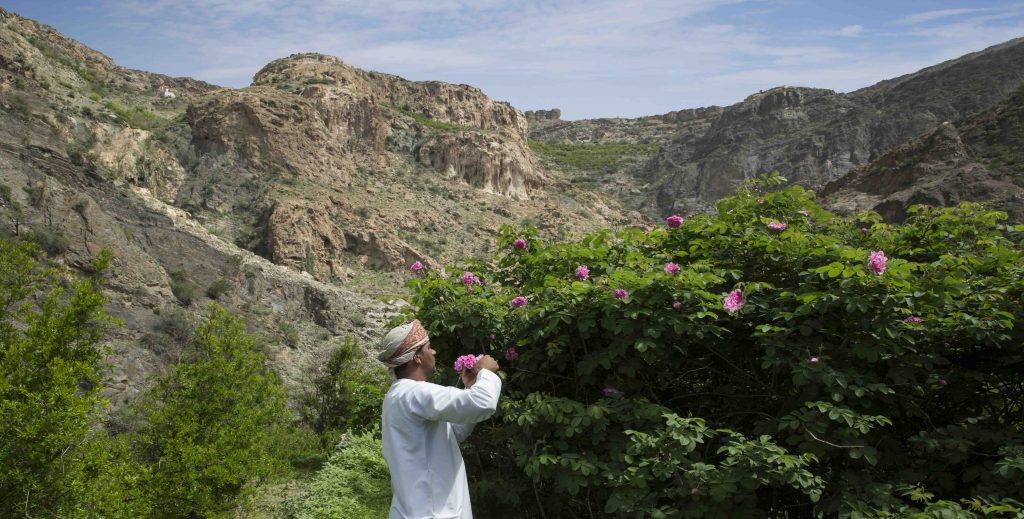 It's Time to Smell the Roses at Anantara Al Jabal Al Akhdar Resort