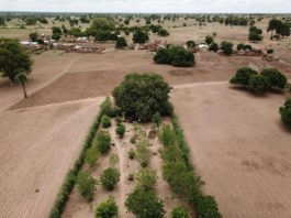 Why Planting a Trillion Trees Should Start With Small Farmers