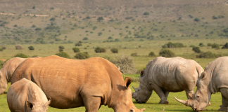 ThreatQuotient Celebrates World Rhino Day 2020 With Ongoing Support for Helping Rhinos