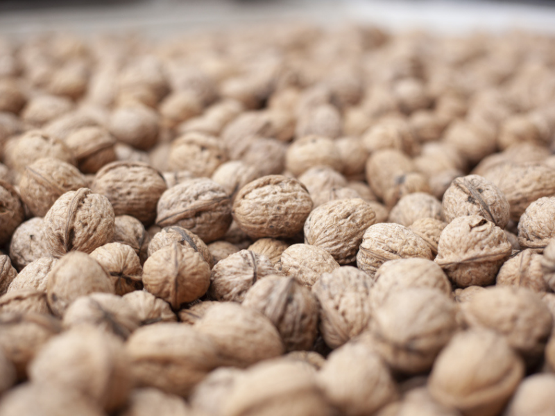 Chile to crack the UAE's walnut market following COVID-19