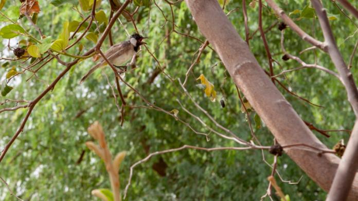 'Sustainable City' deploys monitoring equipment to measure biodiversity impact