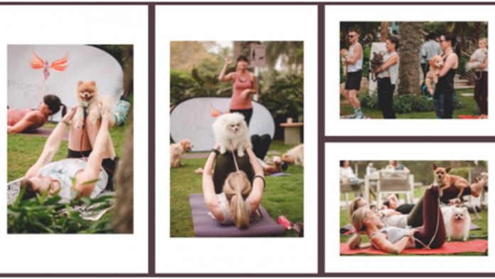 Bounty Beets Hosts Puppy Pilates