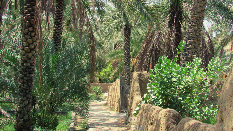 4 Unique Ideas For A Socially Distanced Holiday Adventure In Oman